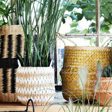 Set cestas Plant