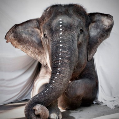 "Photo art ""Elephant Adele"""