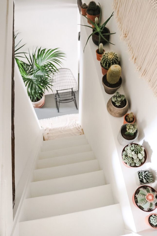 jardin-dentro-de-casa-ideas-13